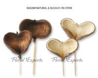 BADAM NATURAL & BLEACH ON STEM - Dried Flowers USA