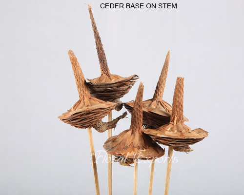 CEDER BASE ON STEM