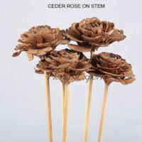 CEDER ROSE ON STEM - Dry Flowers