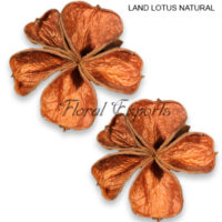 LAND LOTUS NATURAL