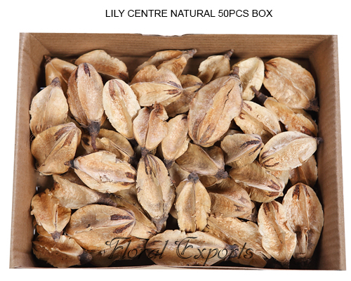 LILY CENTRE NATURAL 50PCS BOX