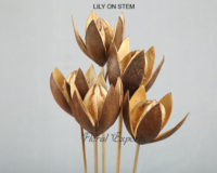 LILY ON STEM - Dry Flowers Bulk Purchase