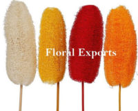 LUFFA COLOUR - Dry Flowers Manufacturer