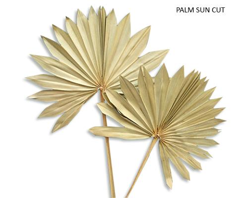 PALM SUN CUT