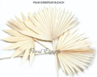 PALM SUNSPEAR BLEACH - Dry Floral Wholesale