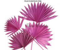 PALM SUNSPEAR PINK - Dry Floral Bulk Purchase
