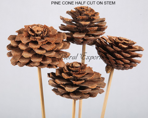 PINE CONE HALF CUT ON STEM