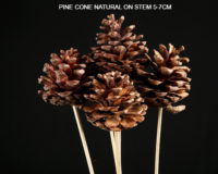 PINE CONE NATURAL ON STEM 5-7 CM - Dry Floral USA