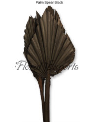 Palm Spear Black Indian Dried Flowers