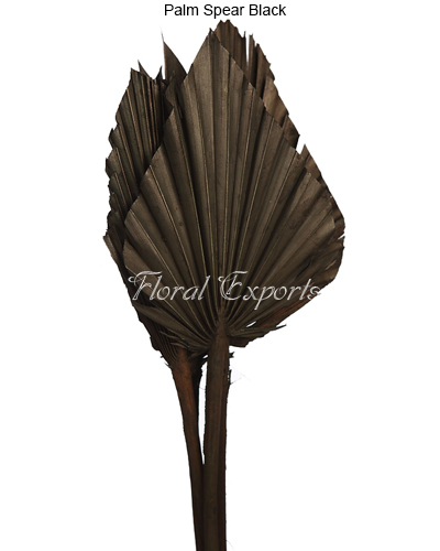 Palm Spear Black.