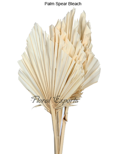 Palm Spear Bleach