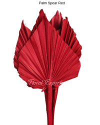 Palm Spear Red