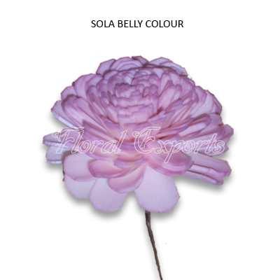 SOLA BELLY COLOR