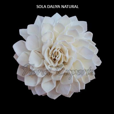 SOLA DAHLIA NATURAL