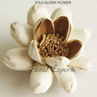 SOLA GLORIA FLOWER - Sola Wood Flowers India