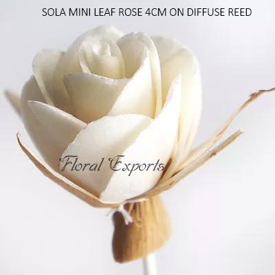 SOLA MINI LEAF ROSE 4CM ON DIFFUSE REED