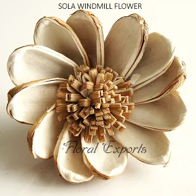 SOLA WINDMILL FLOWER
