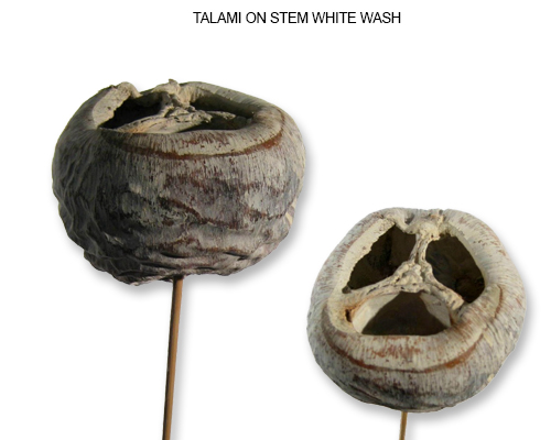 TALAMI ON STEM WHITE WASH