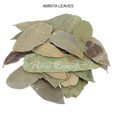 AMRITA LEAVES