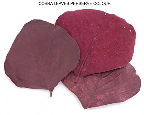 COBRA LEAVES PERSERVE COLOUR