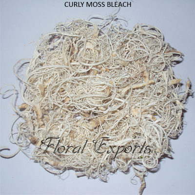 CURLY MOSS BLEACH.