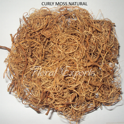 CURLY MOSS NATURAL.