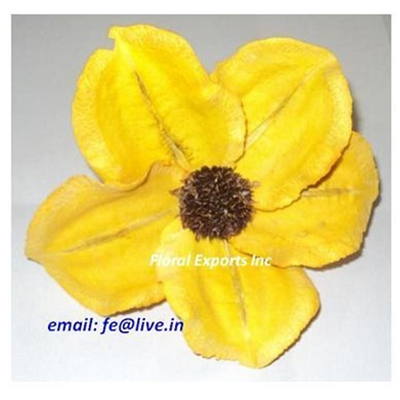 JACARANDA FLOWER YELLOW