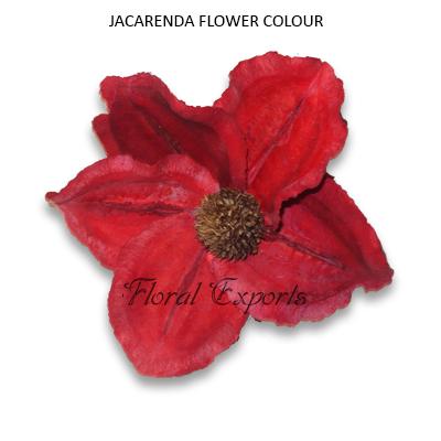 JACARENDA FLOWER COLOUR