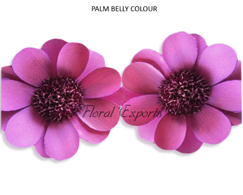 PALM BELLY COLOUR