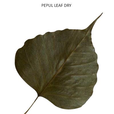 PEPUL LEAF DRY