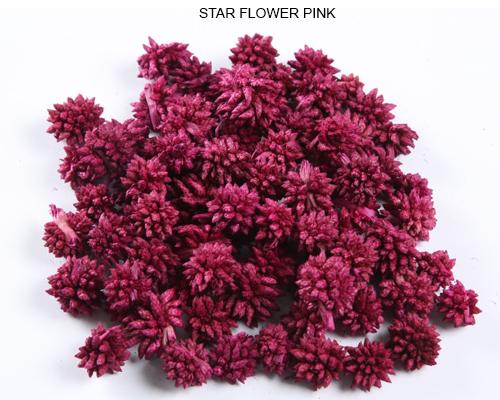STAR FLOWER PINK