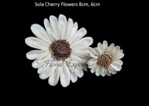 Where to buy Sola Wood Flowers