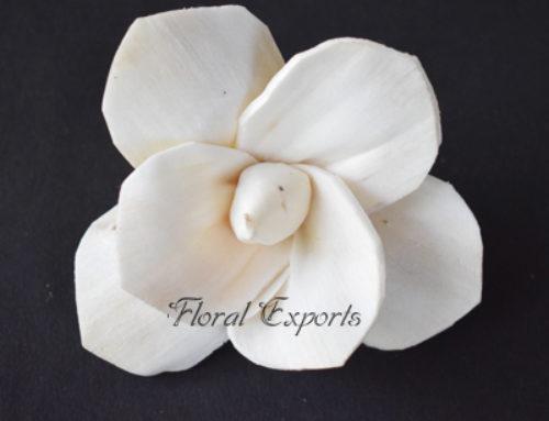Shola Flowers Bulk Purchase