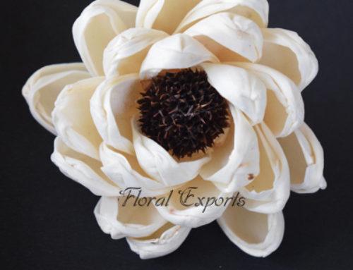 Shola Flowers Supplier