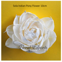 Sola Indian Pony Flower 10cm Sola Flowers - Bulk Purchase